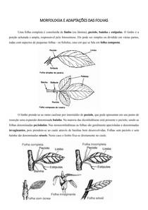 Resumo morfologia e adaptações das folhas