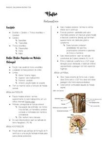Bulbo - Neuroanatomia