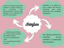 interfase