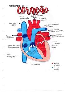 Anatomia do coração