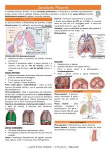 Cavidade Pleural, Traqueia, Pulmão - resumo