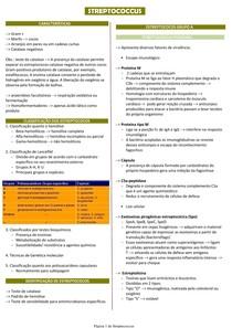 Estreptococos - Microbiologia