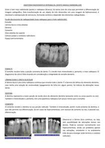 anatomia radiográfica intrabucal