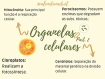 Organelas Celulares - II