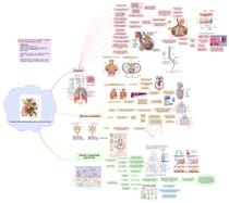 Fisiologia e Anatomia Sistema Respiratório e das Trocas Gasosas