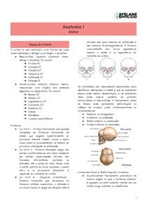 Anatomia I - Ossos do Crânio