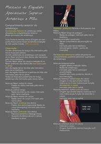 Músculos do Esqueleto Apendicular Superior Antebraço e Mão