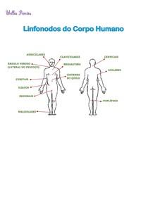 Linfonodos do corpo humano - Drenagem Linfática