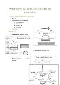 10. Metabolismo das cadeias carbonadas dos aminoácidos