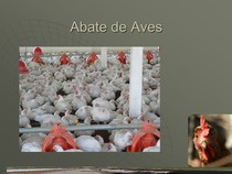 ABATE DE AVES - AULA EM PPT