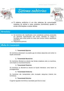 sistema endócrino .docx