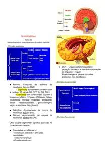 Neuroanatomia docx