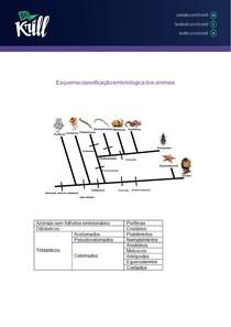 Esquema classificação embriológica dos animais