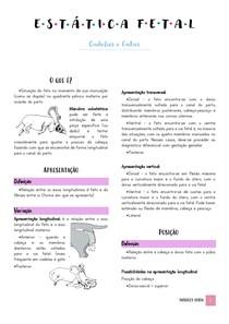 Resumo Estática fetal de cadelas e gatas - Ginecologia e Obstetrícia Veterinária