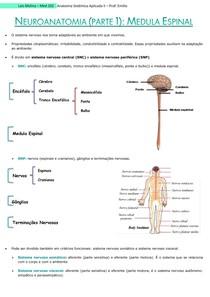 Neuroanato (parte 1) - Medula Espinal