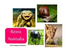 aula - invertebrados e vertebrados