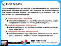 Ciclo de Loss