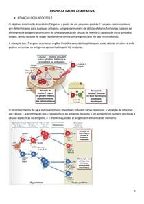 Resposta Imune Adaptativa  - Ativação de Linfócitos