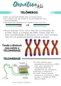 Genética 03 - TELÔMEROS