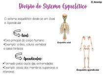 divisao sistema esqueletico