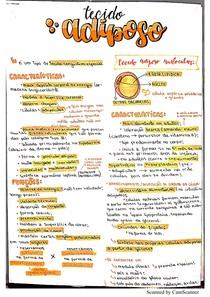 Tecido Adiposo - Histologia I - Medicina Veterinária