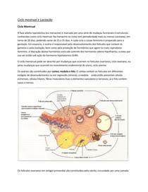 Ciclo Menstrual e Lactação