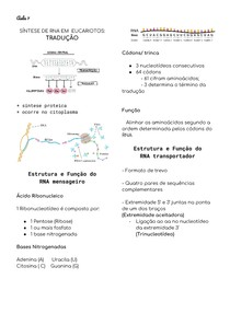 Tradução do DNA