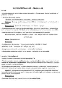 SISTEMA RESPIRATÓRIO - Equinos