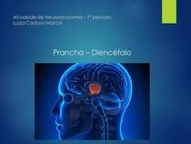 Prancha 02 - Diencéfalo - Neuroanatomia