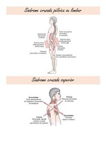 Síndrome cruzada pélvica e síndrome cruzada superior