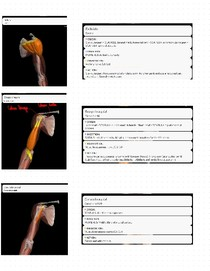 Músculos do braço e antebraço (origem, inserção, ação e inervação)