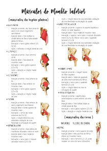 Músculos do Membro Inferior