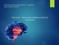 Prancha 05 - Tronco Encefálico e Nervos Cranianos - Neuroanatomia