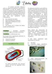 Células Eucariontes e Procariontes - Resumo