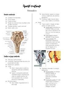 Quarto ventrículo - Neuroanatomia