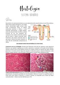 Histologia Sistema Urinário