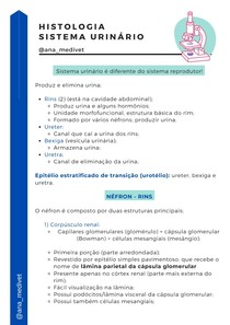 Histologia sistema reprodutor @ana_medivet