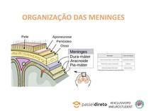 ORGANIZAÇÃO DAS MENINGES