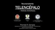 Telencéfalo - Tratos Internos