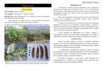 Causas de aborto - Plantas tóxicas - Mimosa tenuiflora
