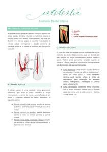Anatomia Dental Interna
