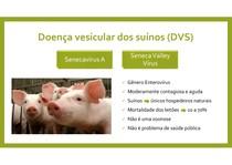 Doença vesicular dos suínos (Senecavírus A ou Seneca Valley Vírus)