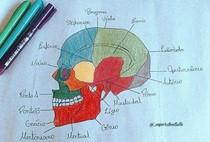 Ossos do crânio (parte 2)