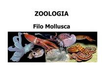 Resumo Zoologia - Filo Molusca