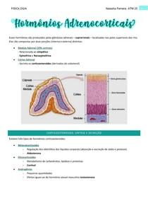 Hormônios Adrenocorticais - fisio