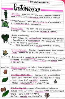 Reino Plantae - Botânica