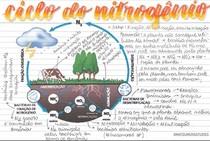 Ciclo do Nitrogênio - Ficha - @matsumurastudies