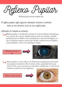Reflexo Pupilar