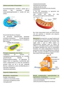 células eucarionte e procarionte |organelas
