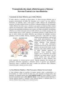Transmissão dos sinais olfatórios para o Sistema Nervoso Central e as vias olfatórias